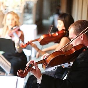 Organic String Quartet image