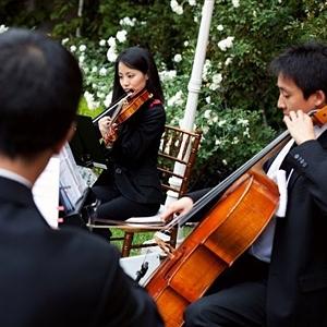 Subito Strings image